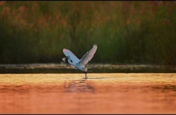 你方唱罢我登场,清晨捕鱼的白鹭。