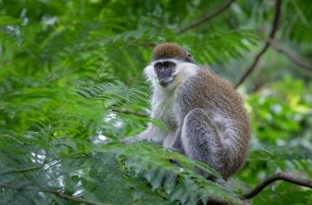 长尾黑颚猴   ----   祝贺荣获野生动物首页精华!