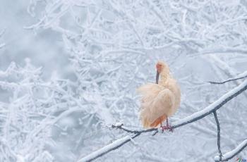 雪中俏梳妆