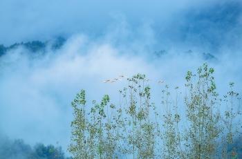 云雾山中任我飞