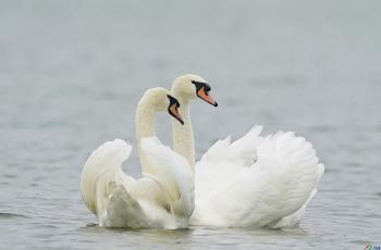 龙湖天使之恋