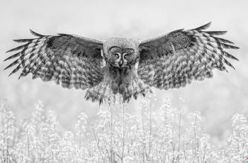 乌林鸮---- 祝贺荣获黑白影像首页精华!
