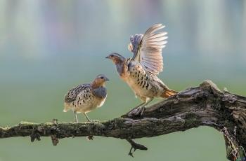 家边拍鸟---(恭贺获首页精华)