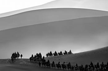 沙漠驼队---- 祝贺荣获黑白影像首页精华!