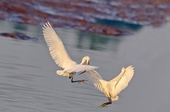 对鸟网改革一点建议!