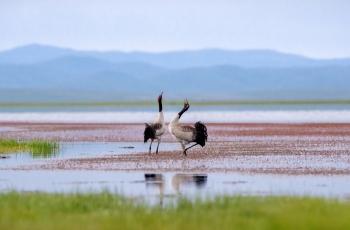 生物多样性保护—哈丘湖见闻