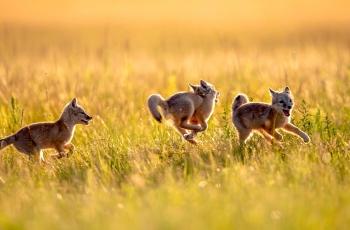 你追我赶   ----   祝贺荣获动物首页精华!