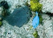 三月的加勒比海海底世界(贺获首页主题推荐)
