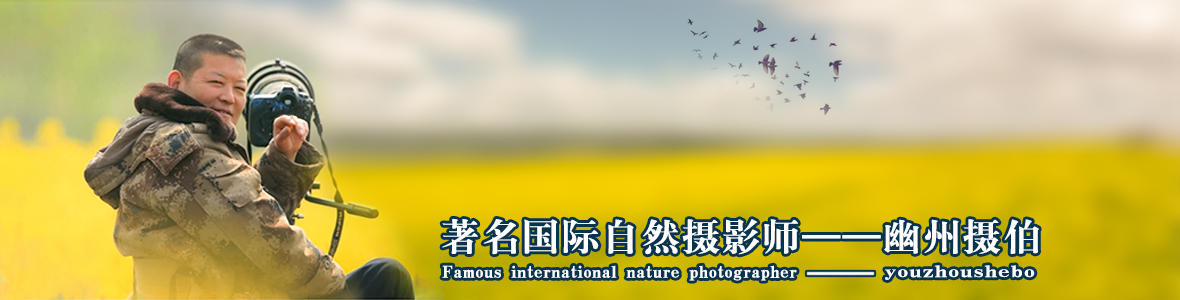 009【国际自然摄影师】幽州摄伯:苔花如米小,也学牡丹开