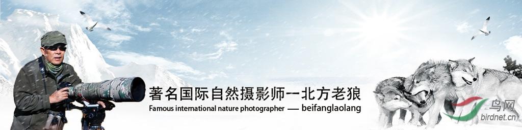 041【国际自然摄影师】北方老狼: 纵情山水, 敬畏自然