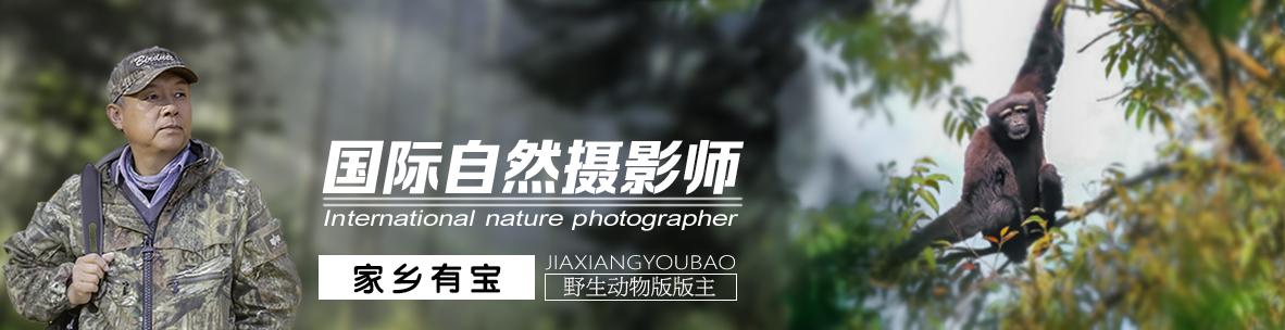 037【国际自然摄影师】家乡有宝:好的平台带给我精彩的生活
