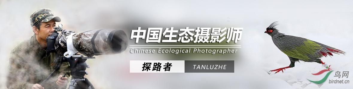 Z 010  探路者作品:收获快乐 陶冶情操