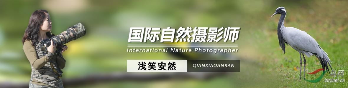 G 039  浅笑安然 : 鸟类摄影是汲取大自然的精华