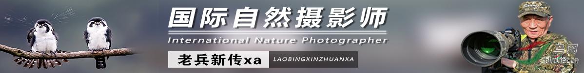 G  48 老兵新传xa:热爱生活,热爱生态摄影