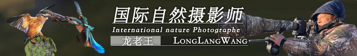 G 64   龙老王bj:交天下鸟友