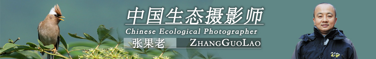 Z 012  张果老作品