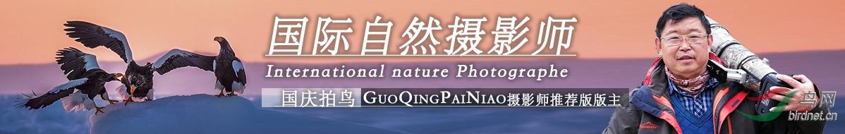 G 68 国庆拍鸟:享受过程  收获快乐