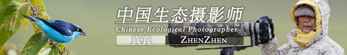 Z 031  真真:与自然相拥 赏生灵之美