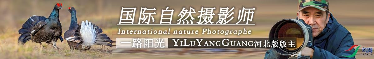G 092一路阳光:用镜头记录大自然美丽的生灵