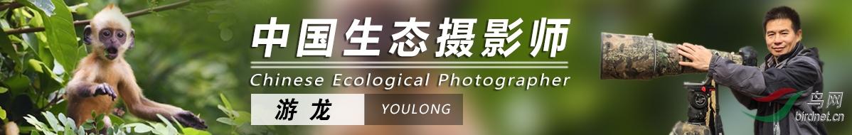 Z 051  游龍:用瞬間記錄鳥類百態