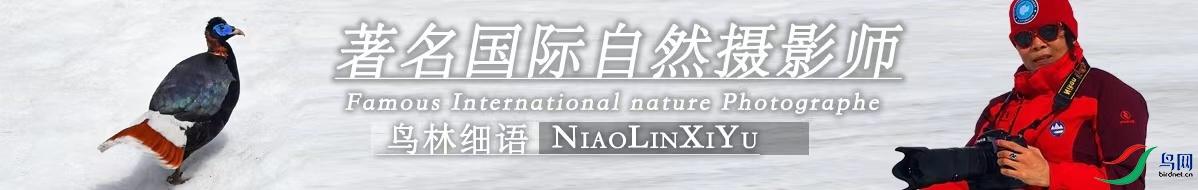 G 105 鸟林细语:聚焦飞羽 情系自然
