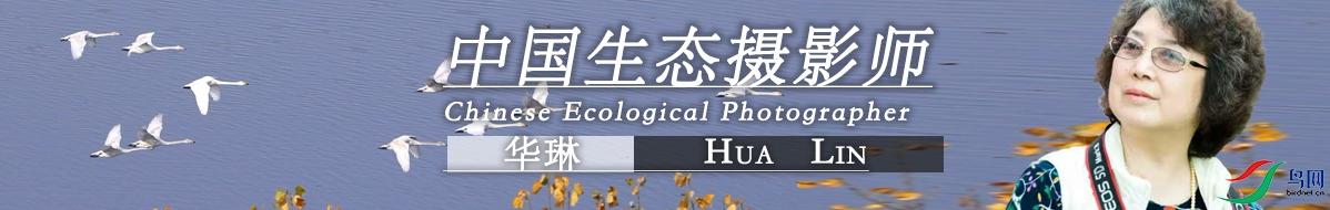 Z 056  华琳 : 健康生活   快乐拍鸟